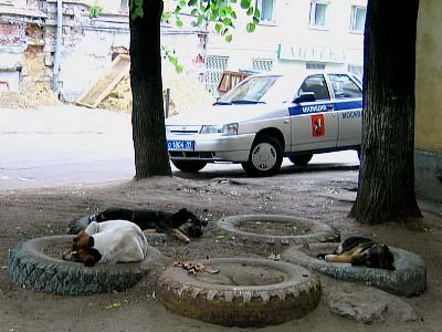 モスクワの野良犬